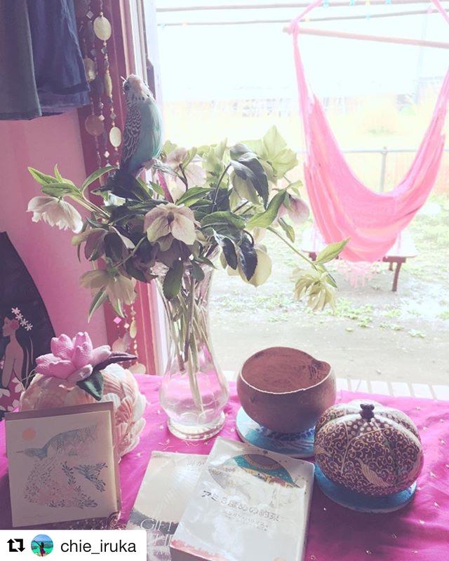 ピンクのチェアハンモックでピンクのコーディネート